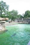 Zoo de Berlin API WAVES (2)